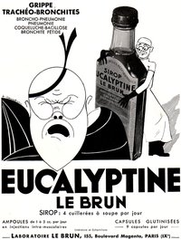 eucalyptine2