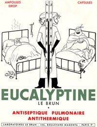 eucalyptine3