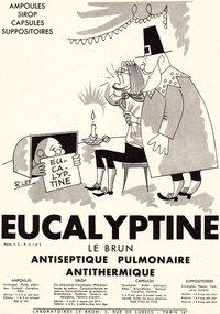 eucalyptine5